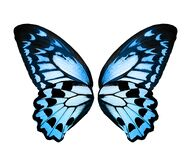 Color monarch butterfly wings, isolated