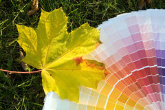 Color nature. Color guide and maple leaf Stock Photo