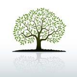 Color Oak Tree. Vector Illustration stock illustration