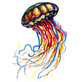 Color Ocean Water Jellyfish Royalty Free Stock Photos