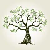 Color Olive Tree del vector con las hojas verdes stock de ilustración