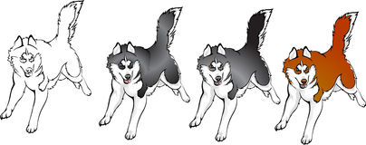 Color options husky. Vector drawing color options Huskies Royalty Free Stock Photo