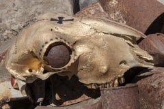 Color oro del cráneo de las ovejas en el pedazo Fotografía de archivo