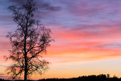 Color palette. A colorful sky at sunrise with a tree in the foreground stock photography