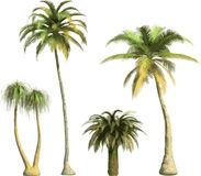 Color Palms -  Stock Photos
