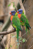 Color parrots stock photo