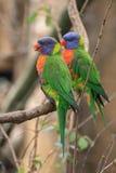 Color parrots Stock Photo