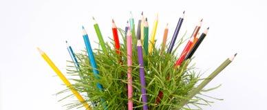 Color pencil and green bush Stock Image