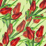 Red tulips of color pencil. Floral seamless pattern on a limepeel background. Color pencil red tulip flower bouquet background  handiwork design floral leaf Royalty Free Stock Image