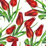 Red tulips of color pencil. Floral seamless pattern on a white background. Color pencil red tulip flower bouquet background  handiwork design floral leaf Stock Photo