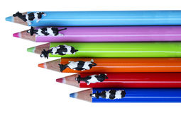 Color pencils and cow Stock Image