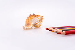 color pencils of various colors near a sea shell Stock Photo