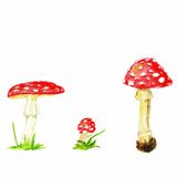 Color pencils vector fly agaric mushrooms. Isolated on white background. Stock Photos