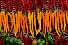 Color pepper in line Royalty Free Stock Photo