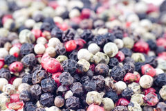 Color peppercorns Stock Photos