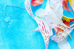 Color petals on blue background Stock Photos