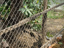 COLOR PHOTO OF CHAIN-LINK FENCE Royalty Free Stock Image