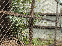 COLOR PHOTO OF CHAIN-LINK FENCE Stock Photos
