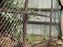 COLOR PHOTO OF CHAIN-LINK FENCE Royalty Free Stock Photo