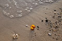 Colorful sea shell on the golden sand of the beach royalty free stock photo