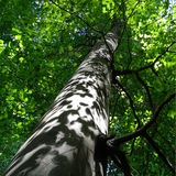 Color photography of beech tree Stock Photo