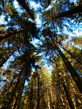 Color photography of forest Royalty Free Stock Photos