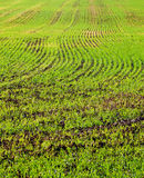 Color photography of green field. Color detail photography of green field with lines Royalty Free Stock Photo