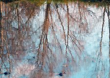 Color photography of trees reflection on water Stock Image