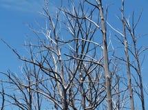 Color plata enfrente de un cielo azul Imágenes de archivo libres de regalías