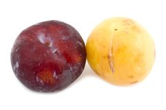 Color plum Stock Photo
