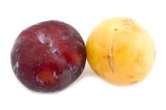 Color plum stock photo