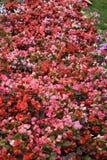 Color por completo Diseño web imagen de archivo libre de regalías