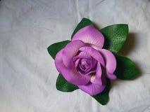 Color púrpura Rose Fotografía de archivo libre de regalías