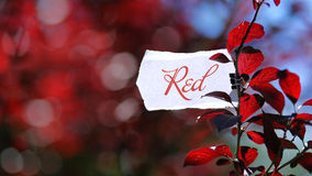 Color red in nature. Torn white piece of paper on tree branch with red leafs with message symbolizing red color of nature. You can replace the message Royalty Free Stock Photo