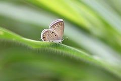 Color rojizo de la mariposa en las hojas verdes fotos de archivo libres de regalías