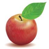 Color rojo de Apple Imagenes de archivo