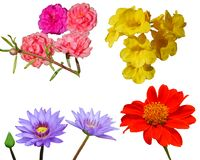 Color rojo del rosa del beautifil de la naturaleza del fondo de la flor foto de archivo libre de regalías