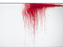 Color rojo en agua Fotografía de archivo libre de regalías
