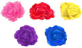5 color rose collection icon design by vector Royalty Free Stock Photos