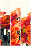 Color Roses Background,Flower background retro style Royalty Free Stock Photos