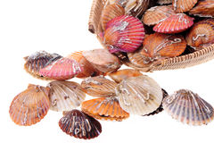 Color scallops Royalty Free Stock Photo