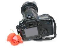 Color scarlatto del fiore una rosa Fotografia Stock Libera da Diritti