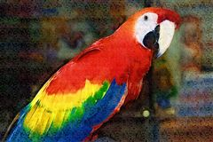 Color scarlatto della pittura del Macaw fotografia stock libera da diritti
