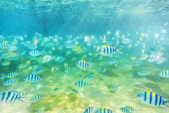 Color of Sea fish Royalty Free Stock Photography