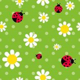 Color seamless pattern flowers daisies and ladybugs. Vector color seamless pattern flowers daisies and ladybugs Royalty Free Stock Image