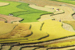 Color segments of the terraced fields Stock Images