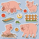 Color set of cute domestic animals and objects, vector pigs Stock Images
