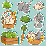 Color set of cute domestic animals and objects, vector rabbits Stock Image