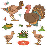 Color set of cute farm animals and objects, vector family turkey. Color set of cute farm birds and objects, vector family turkeys vector illustration