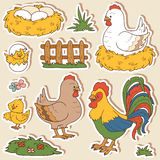 Color set of cute farm animals, vector family chicken Royalty Free Stock Photography